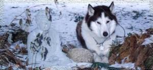 Wolfie in Kingsmere